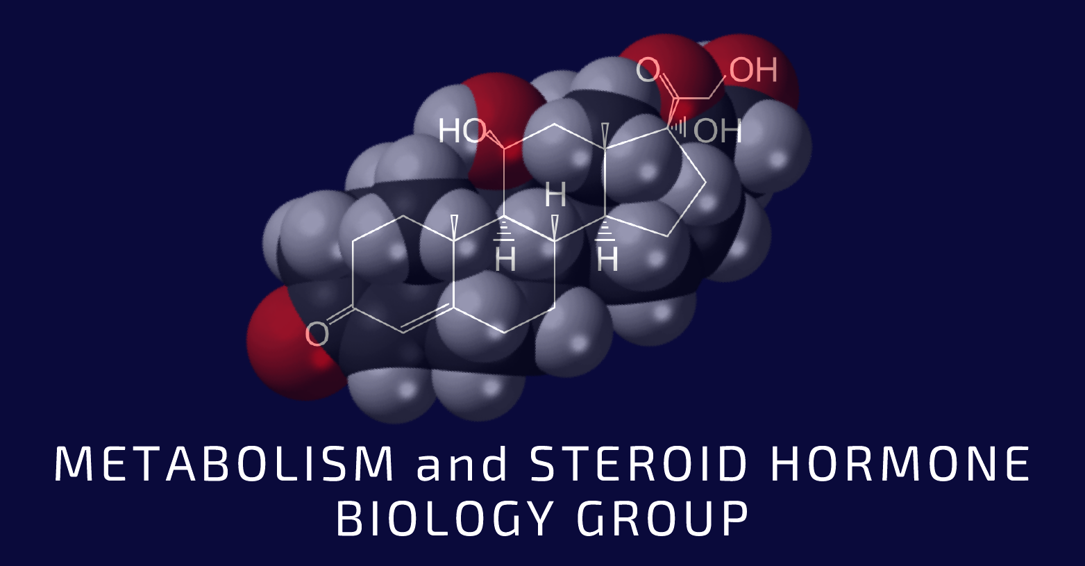 Anais Y Lili tomlinson group: metabolism and steroid hormone biology
