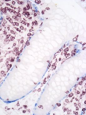cell staining image